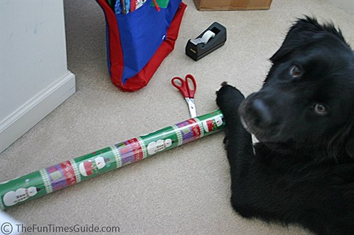 wrapping with a dog.jpg