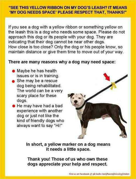 YellowRibbon3.jpg