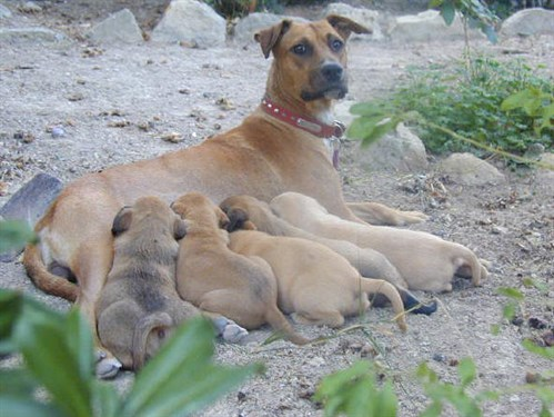 mom and pups.jpg